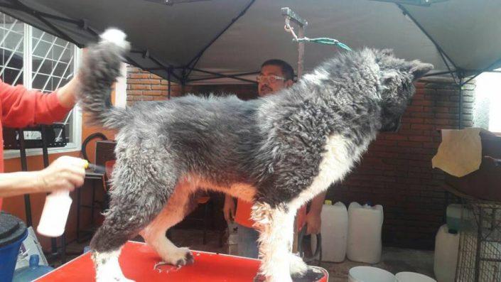 peluqueria veterinaria canina