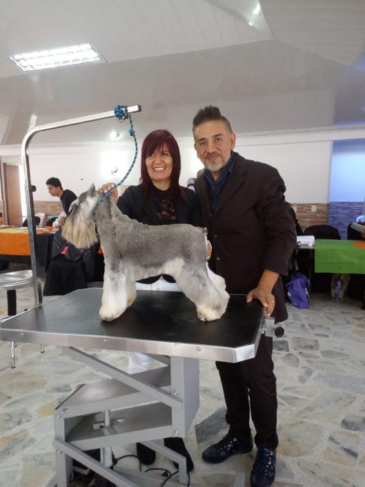 peluqueria canina en cali