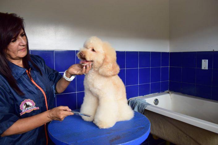 peluqueria veterinaria canina cali